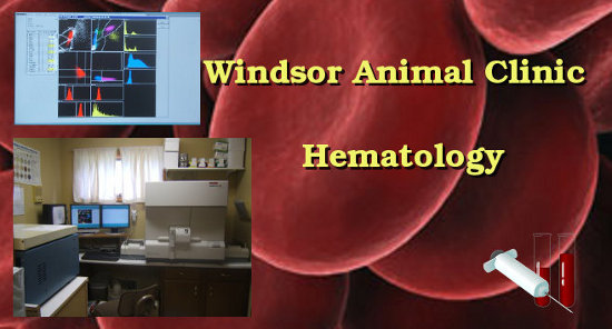 veterinary hematology (blood work) done at the Windsor Animal Clinic