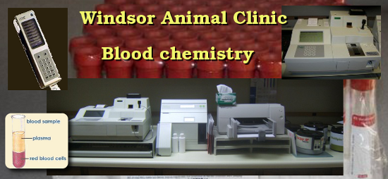 blood chemistry machines used at the Windsor Animal Clinic