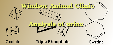 Analysis of urine done at the Windsor Animal Clinic
