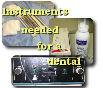 veterinary dental instruments used at the Windsor Animal Clinic