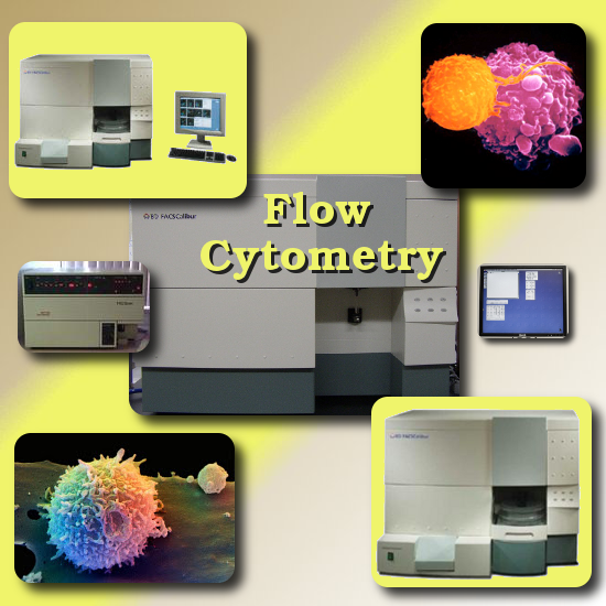 flow cytometry done at the Windsor Animal Clinic