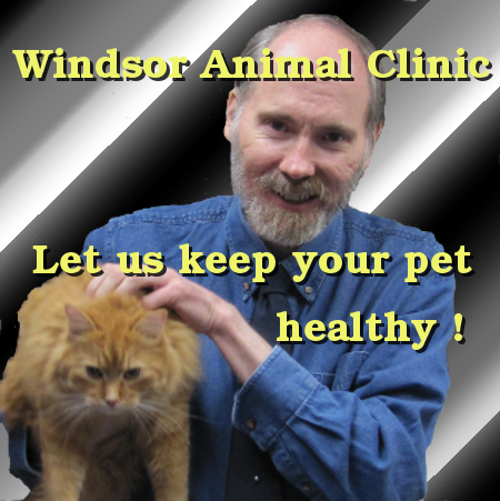 Dr. Jeff Cripps at the Windsor Animal Clinic