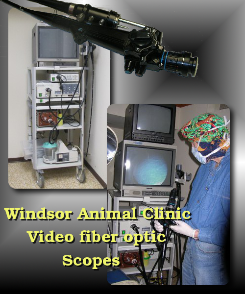 veterinary endoscope used by Dr. Jeff Cripps at the Windsor Animal Clinic